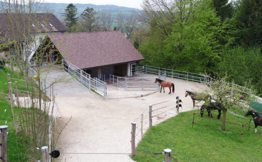 Pferdestall Seengen
